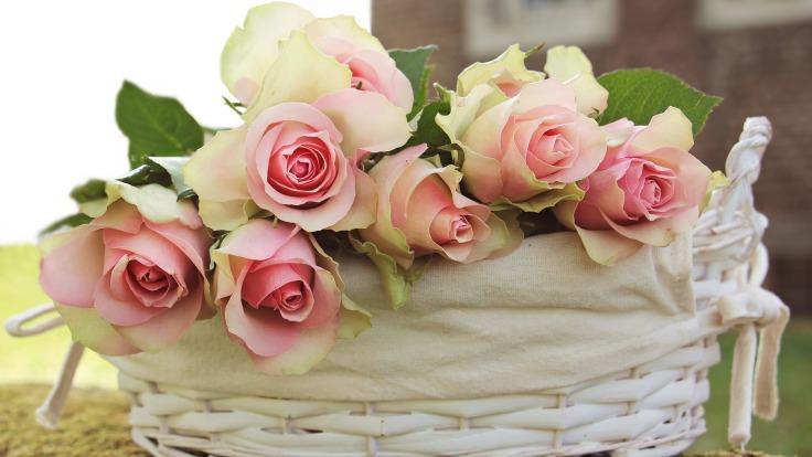 roses-2208357_1920.jpg